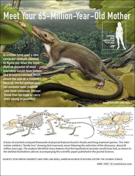 placental-mammal-ancestor-130207b-02
